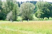 Beuerberg-2017-1253-1114